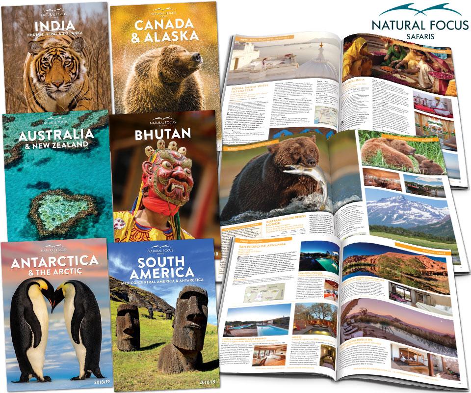 nfs-brochures-2017