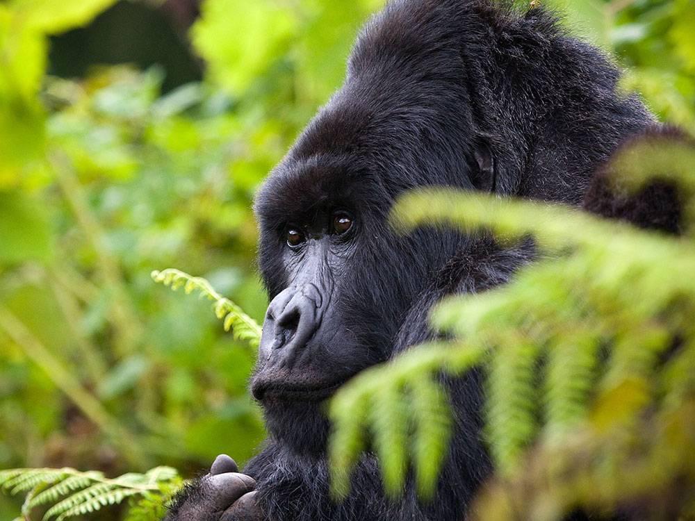 rwanda-2017-1-v2