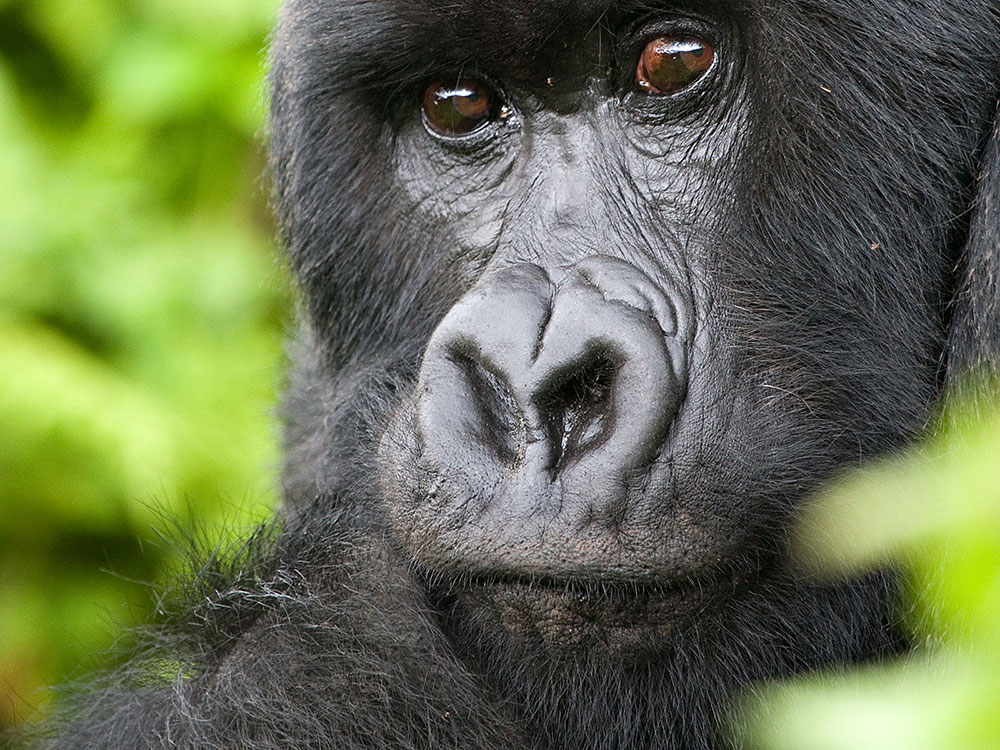 rwanda-2017-7-v2